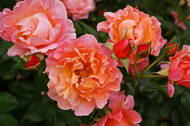 Ochrana květin před chorobami a škůdci